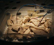 Fiberoptiske temperaturfølere på grillet kylling.
